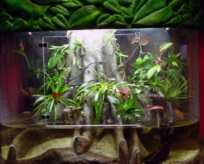 how to set up a dart frog tank