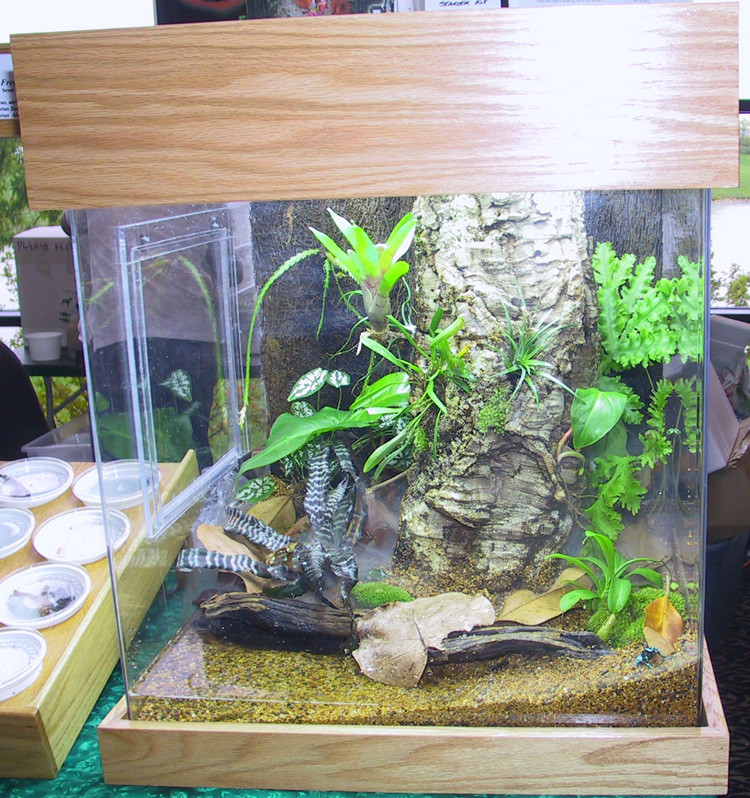 Poison Dart Frogs Poison Arrow Frogs Dart Frogs Amp Poison