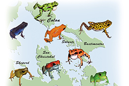 Dart Frog Breeding and Miscellaneous