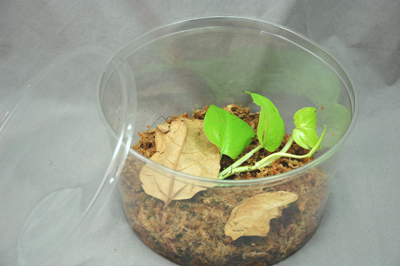 Juvenile and Temporary Frog Housing