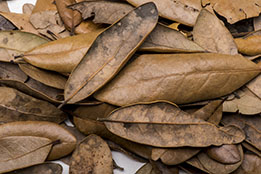 Leaf Litter and Substrates