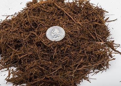 New Zealand Tree Fern Fiber (One Gallon bag)