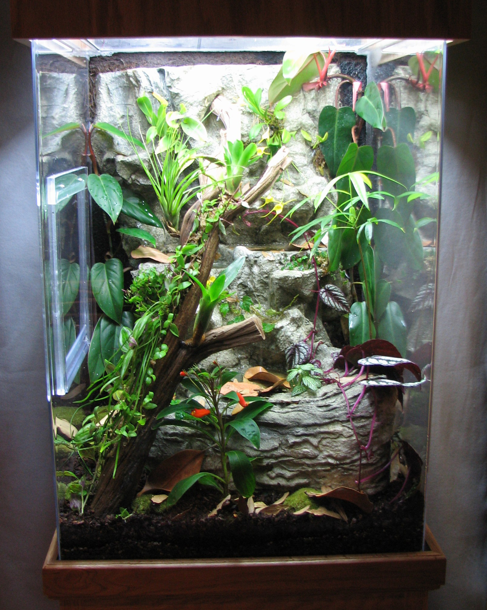 Poison Dart Frogs Poison Arrow Frogs Dart Frogs Poison Arrow Dart