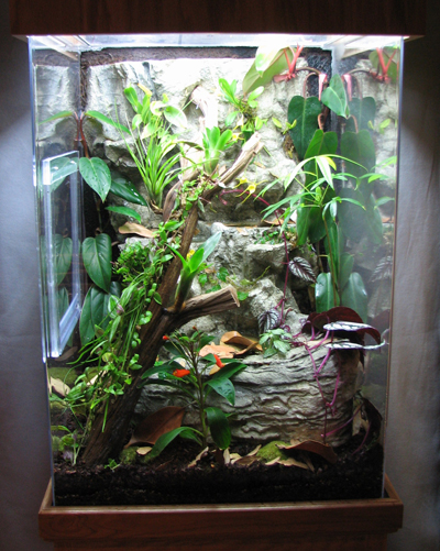 Saurian Offers Dart Frogs Fruit Flies Plants And Supplies